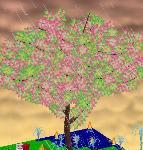 みいみいさんの木