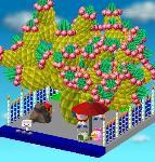 イザナギさんの木